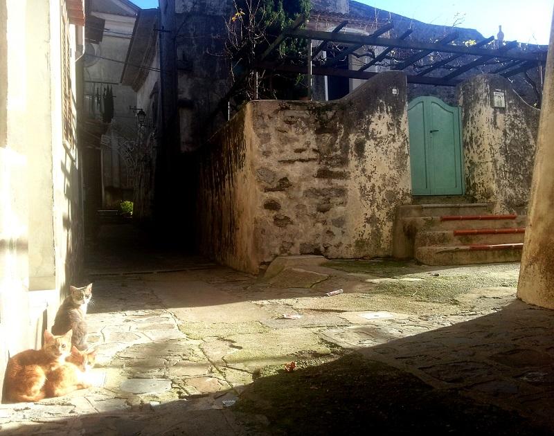 CasaOrtega_cortile laterale_ingresso_Bosco